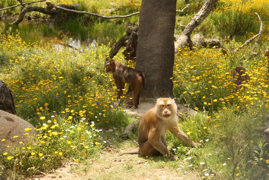 Macacos no monte